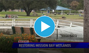 Audubon Society developing plan to restore wetlands in Mission Bay